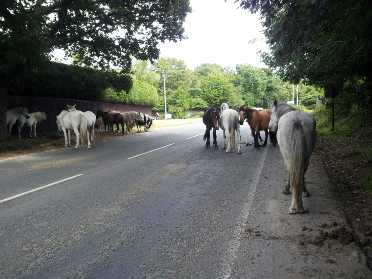 Horses of the New Forest